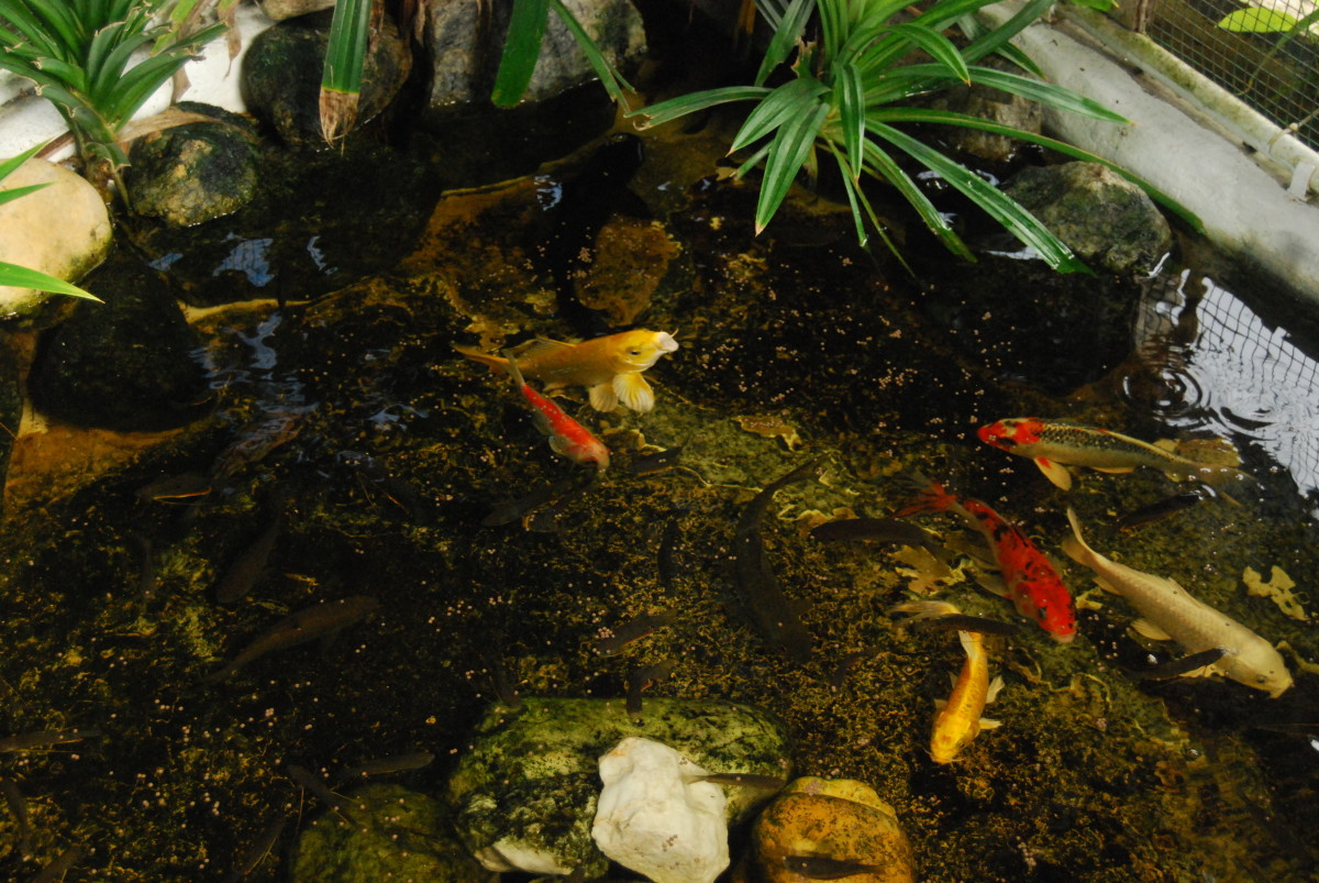 There is a small fish pond in the garden as well.
