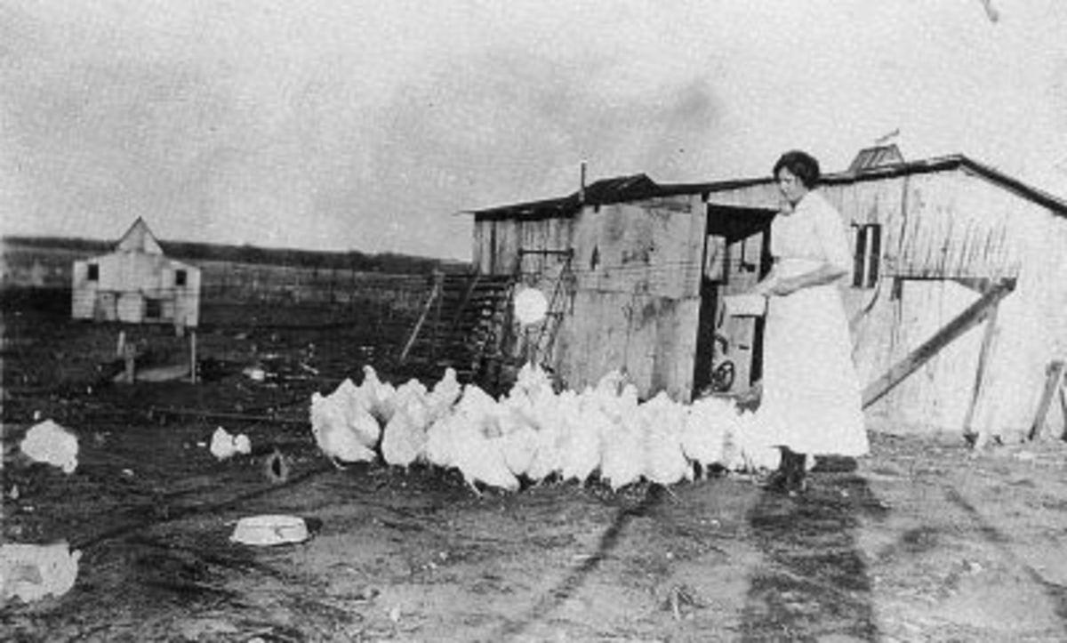 My Grandmother, Ruth (Vining) McGhee Feeding the Chickens