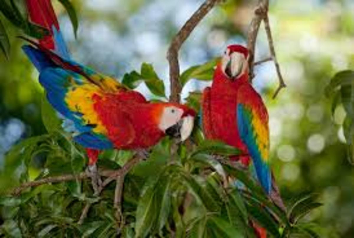 Parrots of Angel Falls