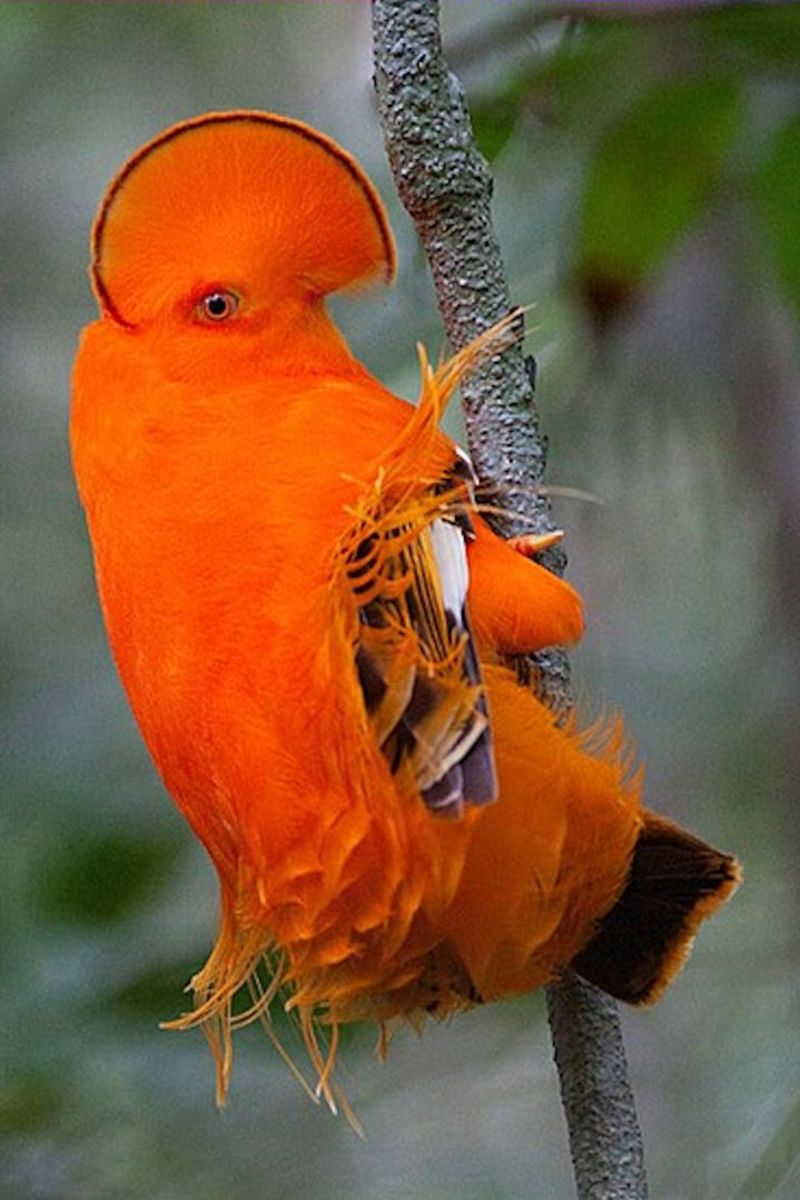 Colorful Bird of Angel Falls