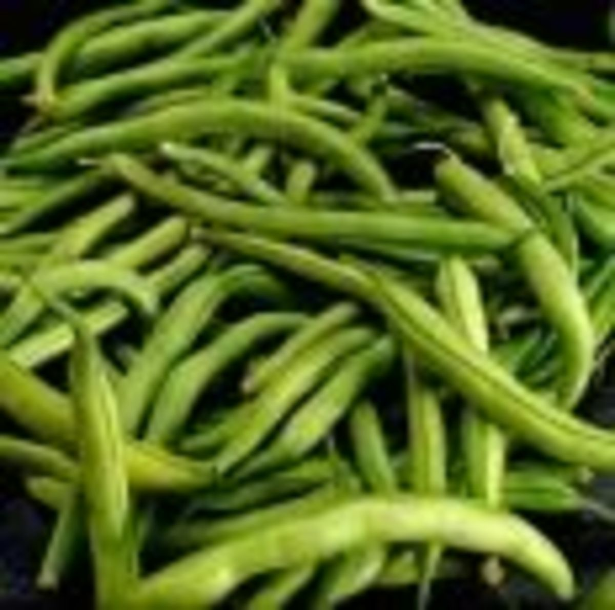 Dilly Beans - Pickled Green Beans