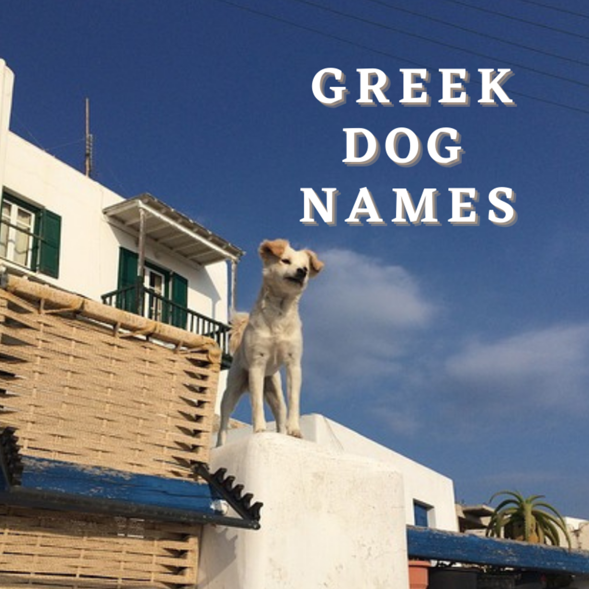 Dog watching others in Greece