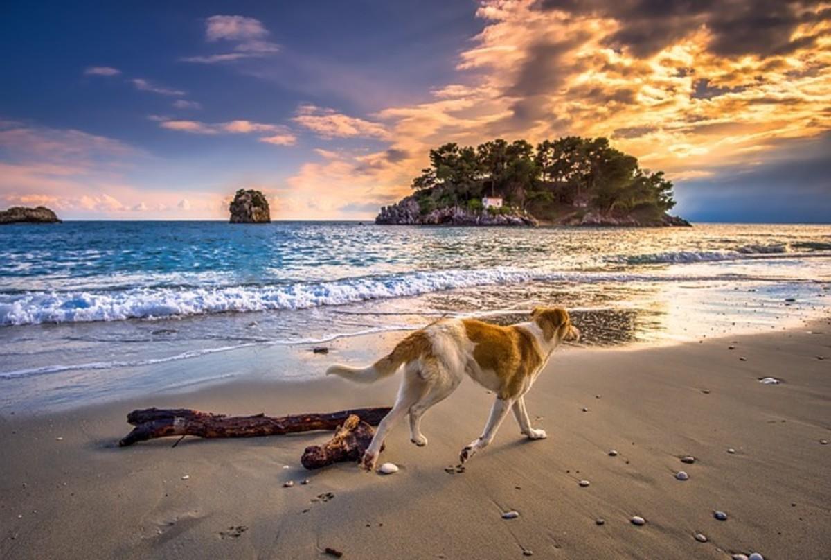 Dog Walking on Greek Beach