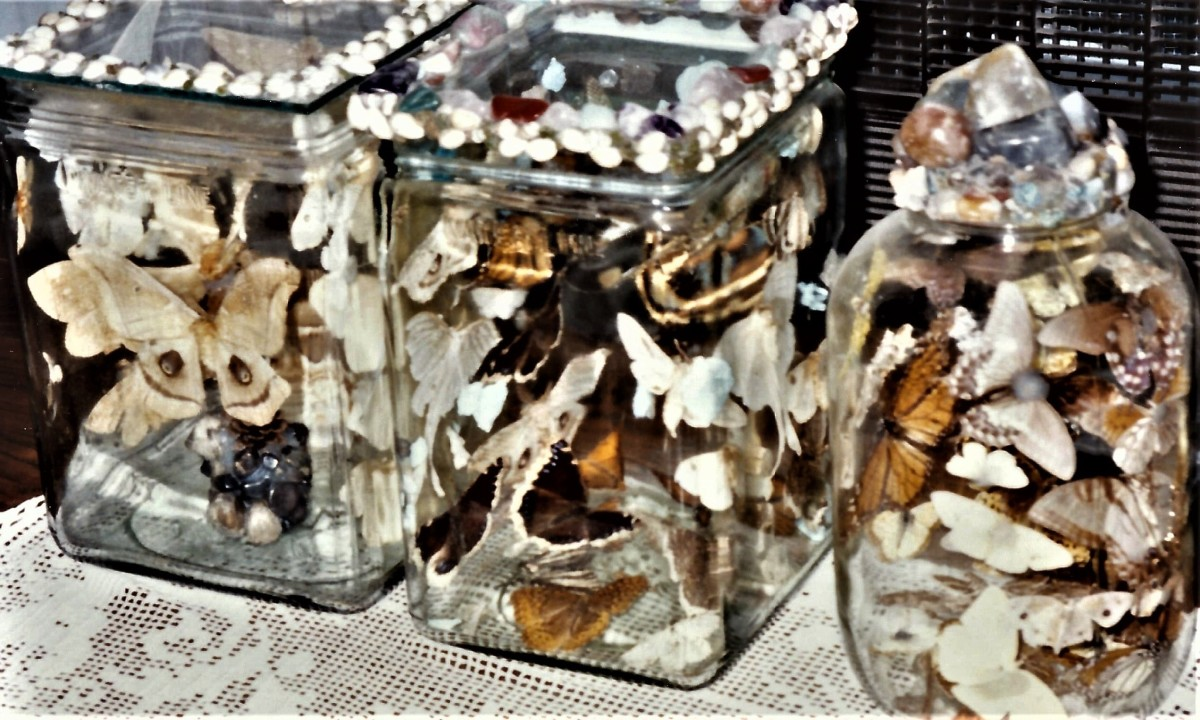 Jarred collection of butterflies