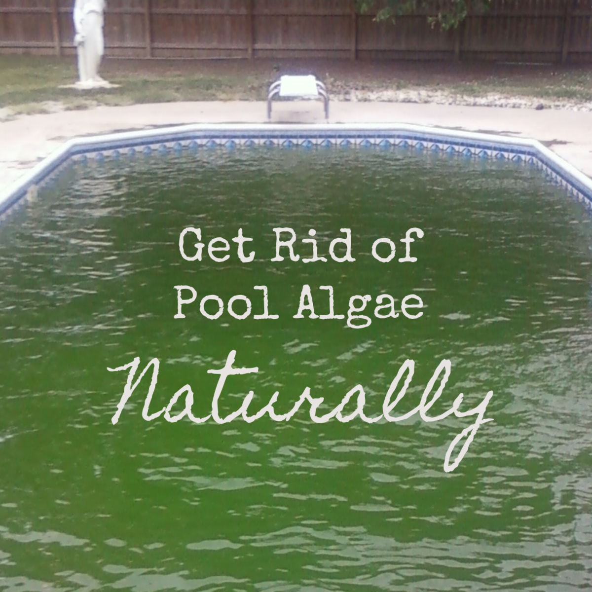 You don't need harsh chemicals to treat the algae in your pool.