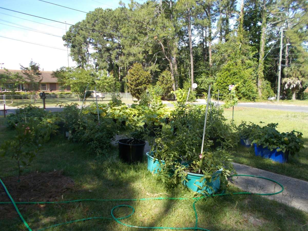 My frontyard container garden.