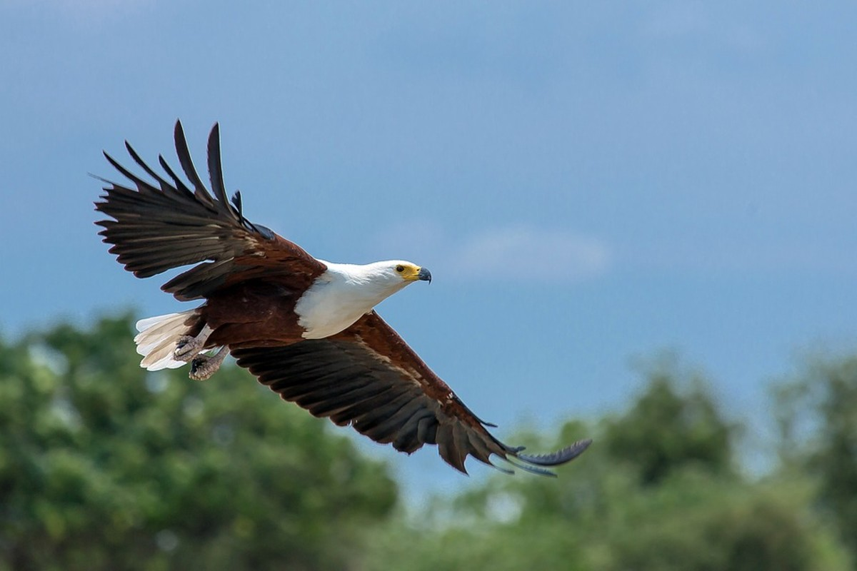 the-top-5-national-birds-of-africa