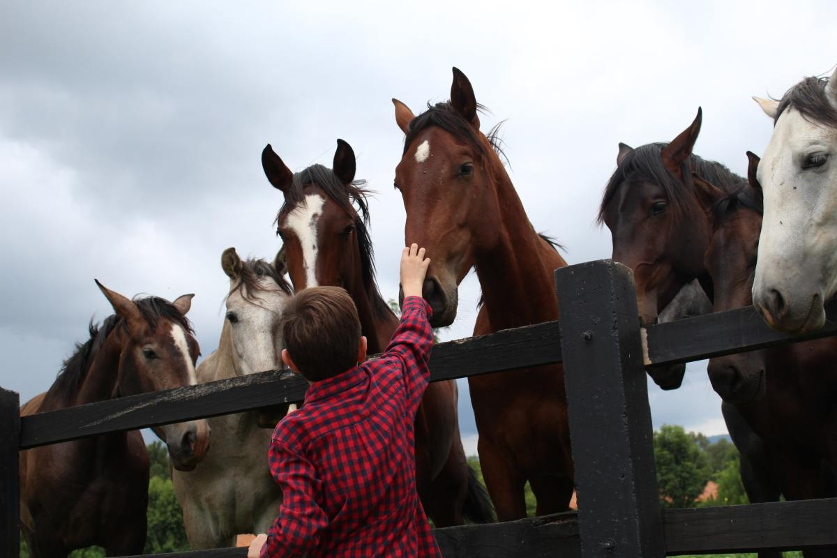 Do you raise horses? One of these names may be suitable.