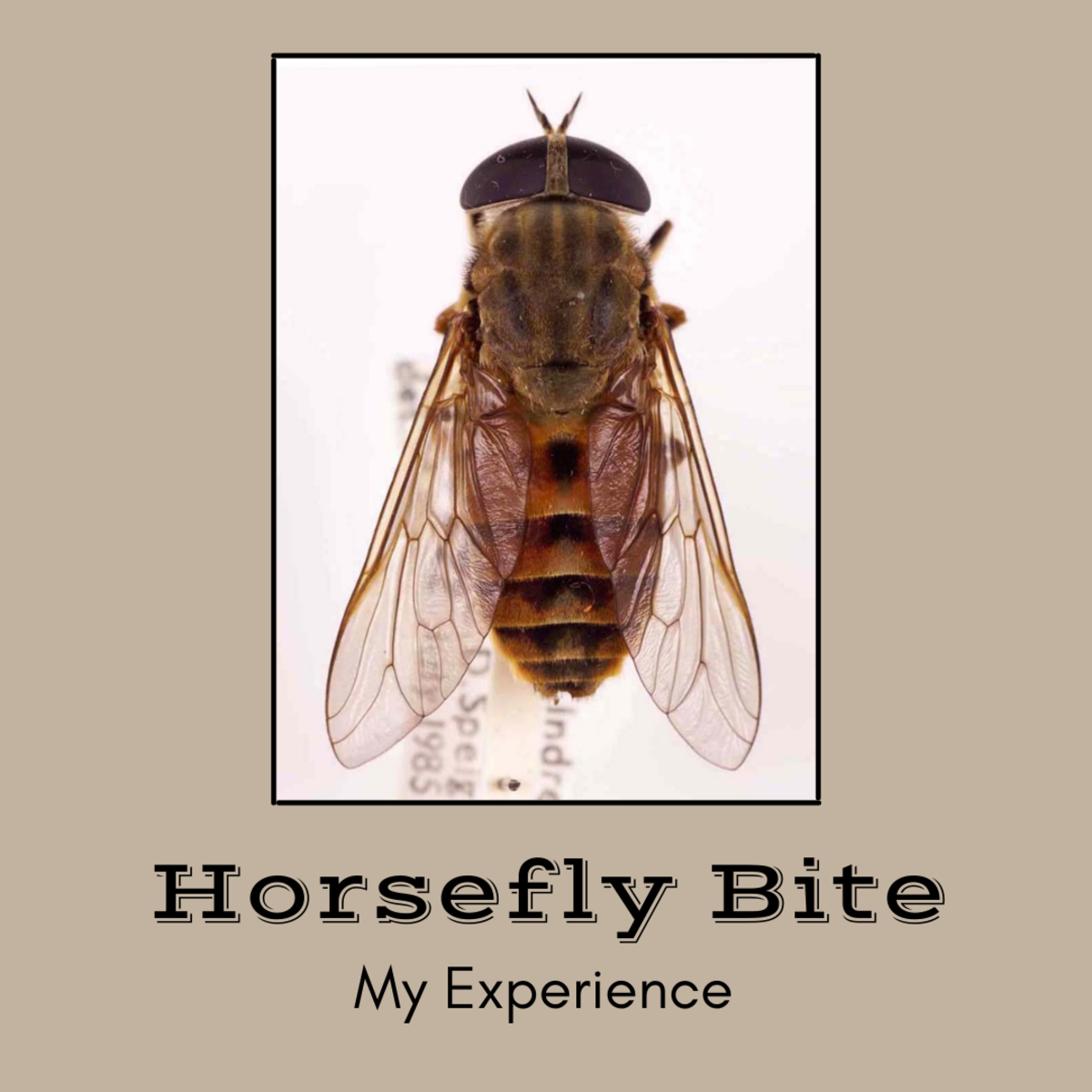 Negative Reaction to a Horsefly Bite: My Recovery Experience