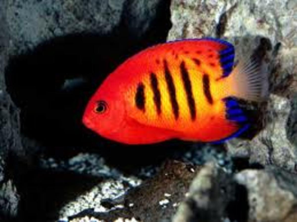 Beginner Level Saltwater Fish
