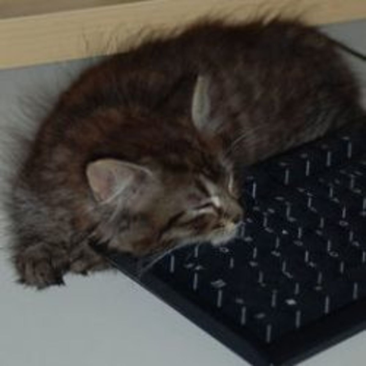 writer's block, kitten