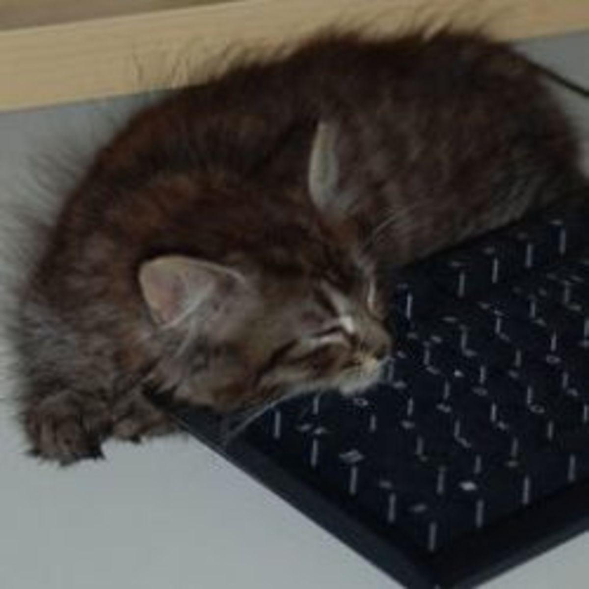 writer's block, kitten