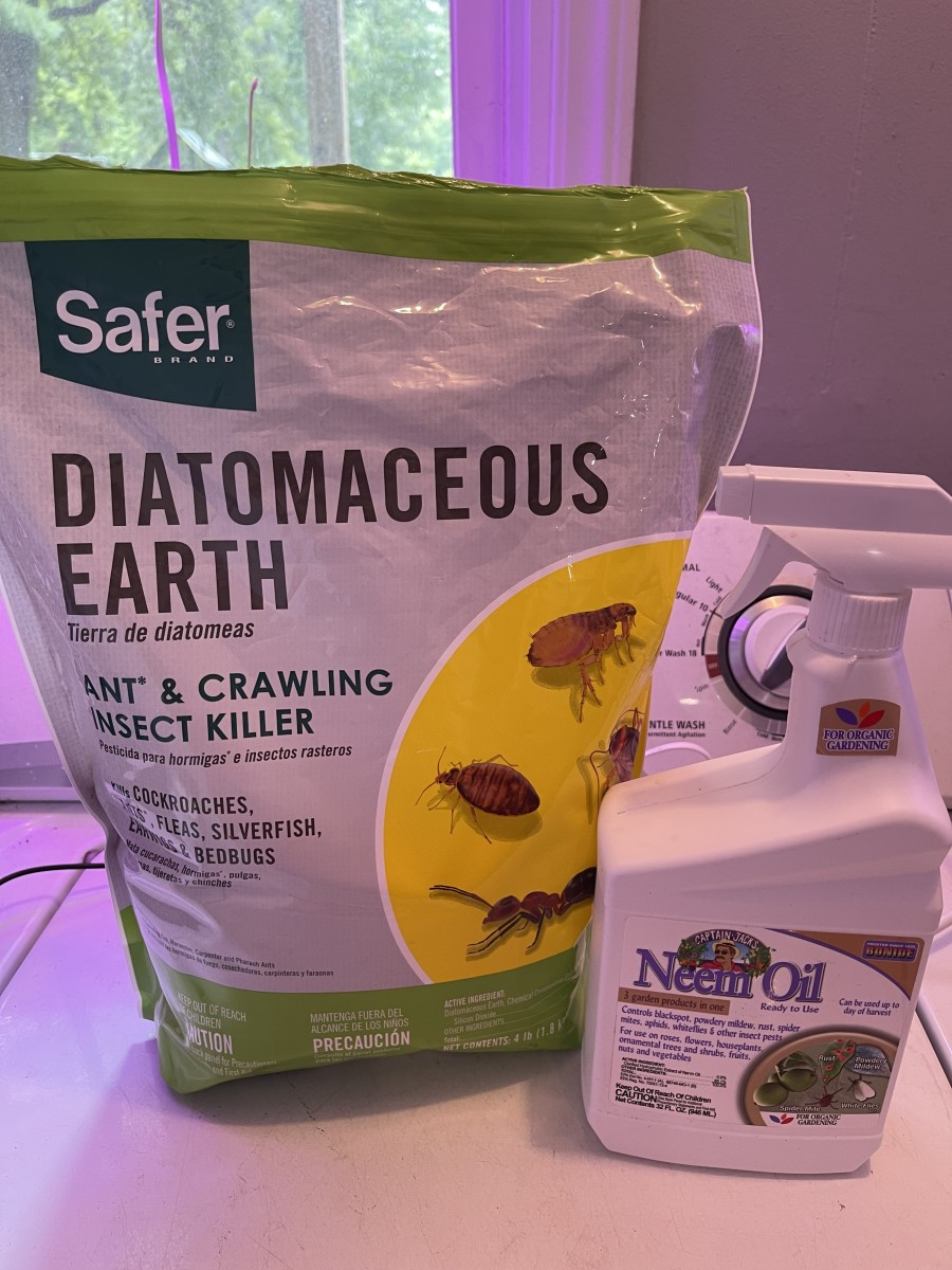 A bag of diatomaceous earth and a spray bottle of neem oil.