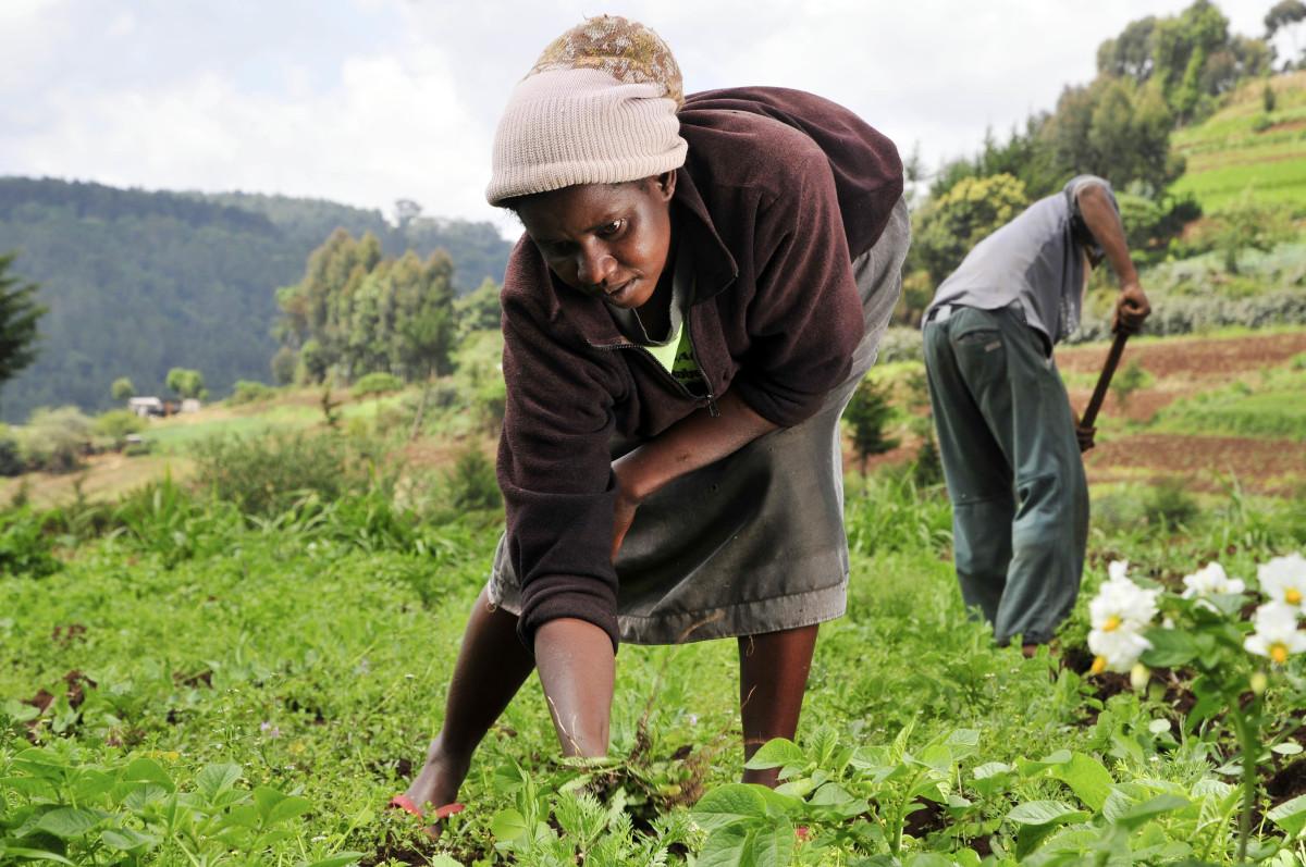 A Kenyan woman working on her farm