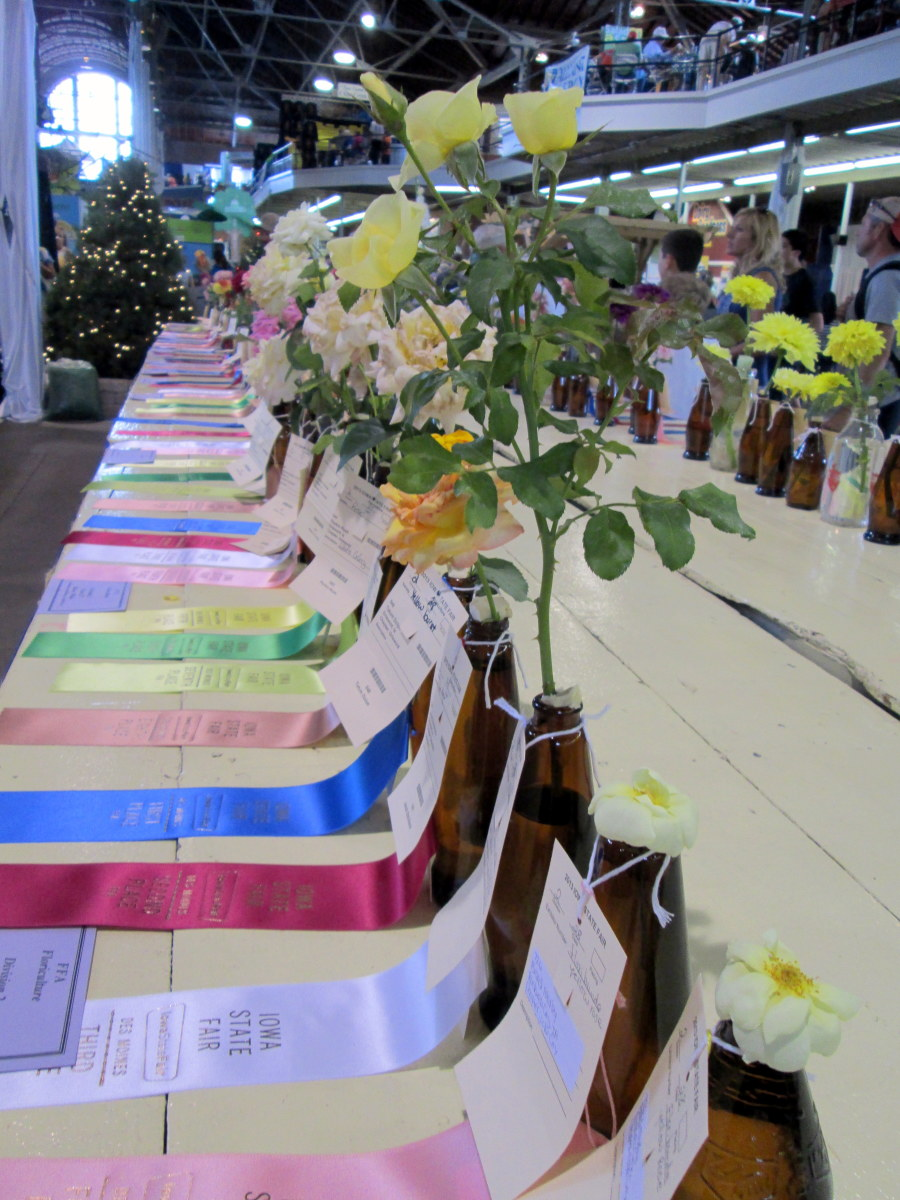 Prize-winning flowers on display.