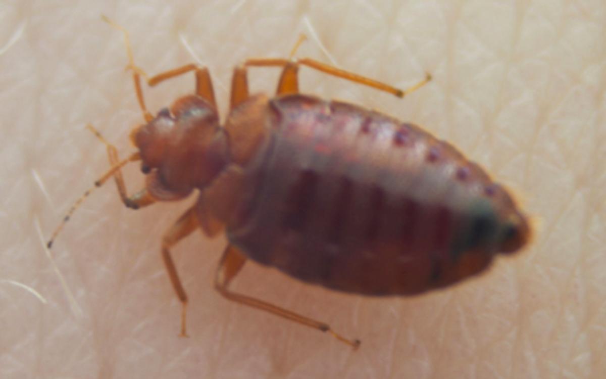 A Bud Bug