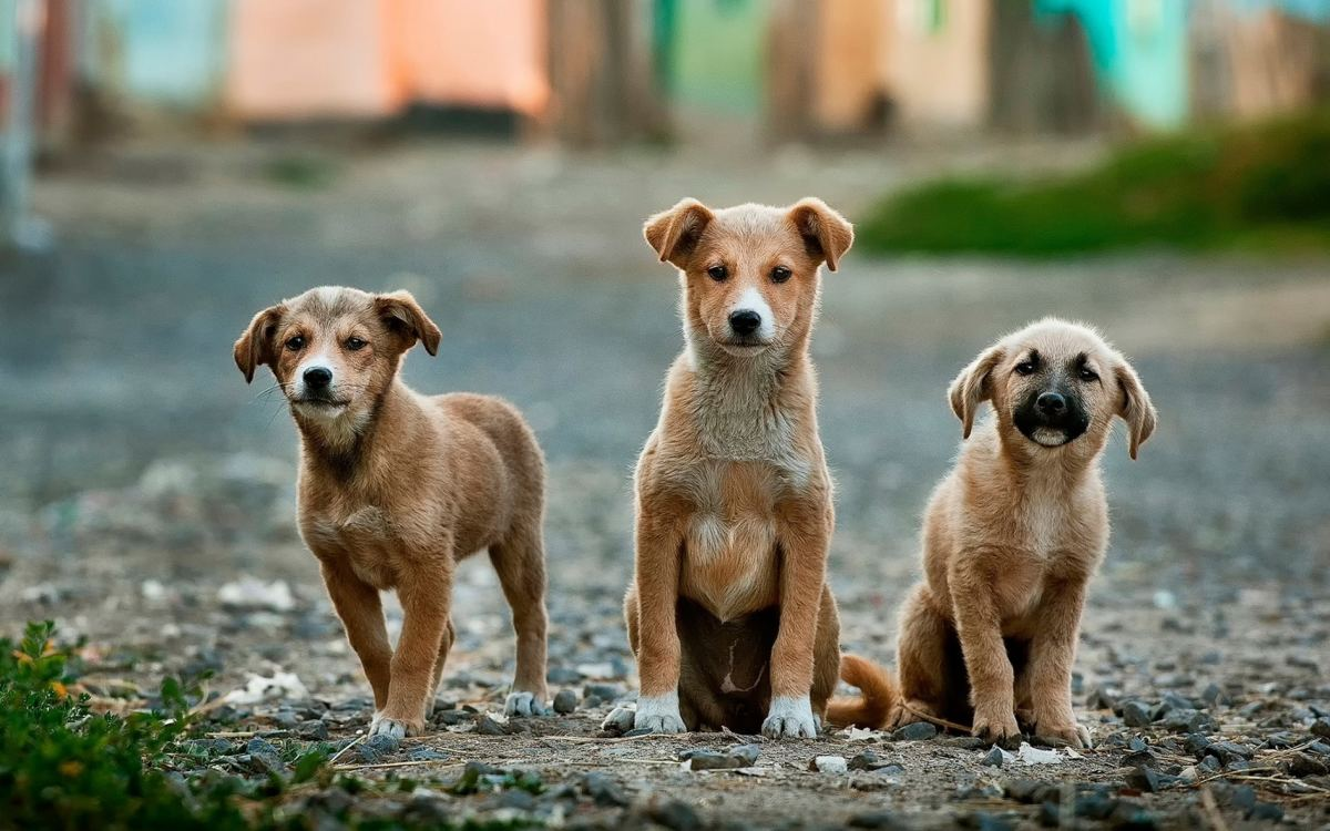 why-buy-if-you-can-adopt-one