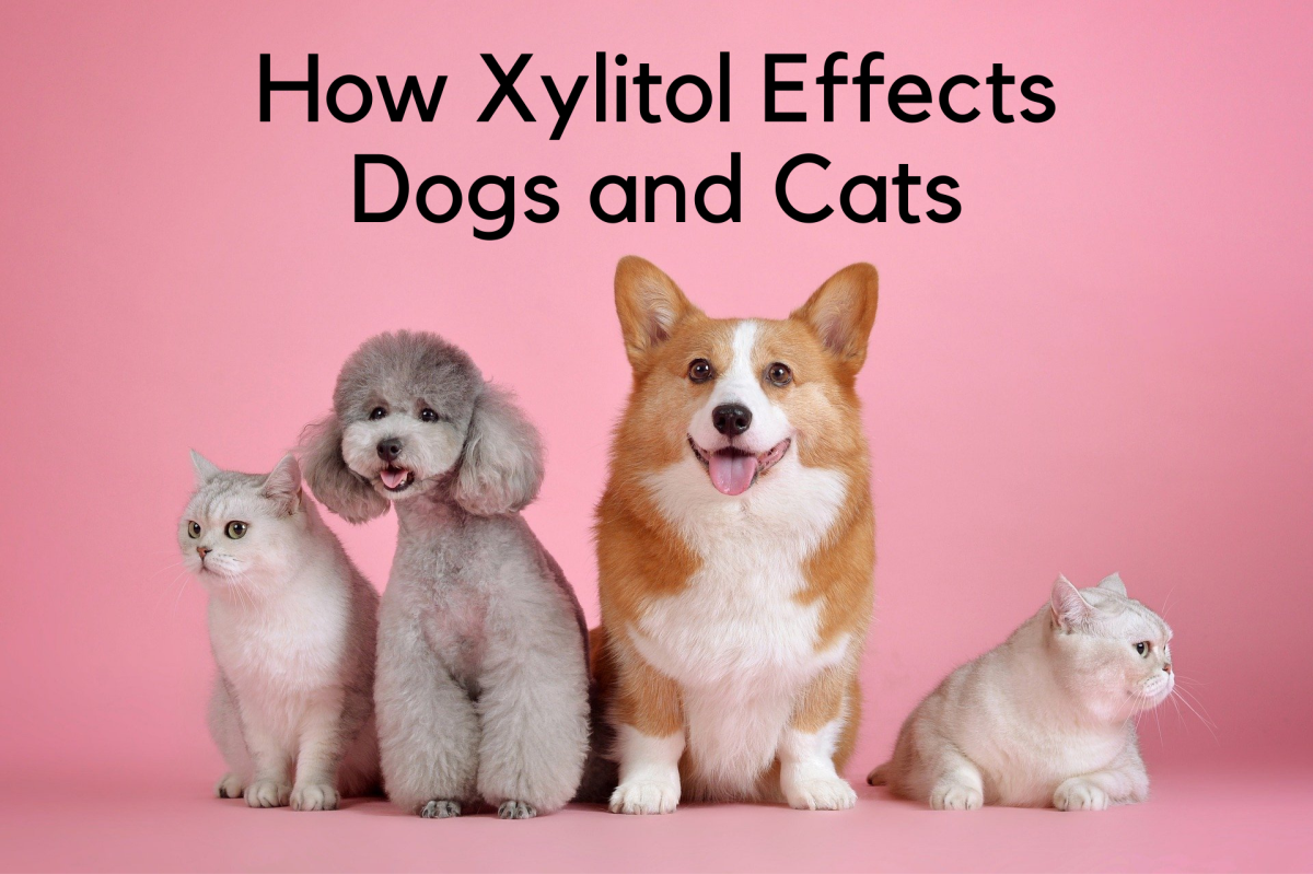 all-about-xylitol-poisoning-in-pets