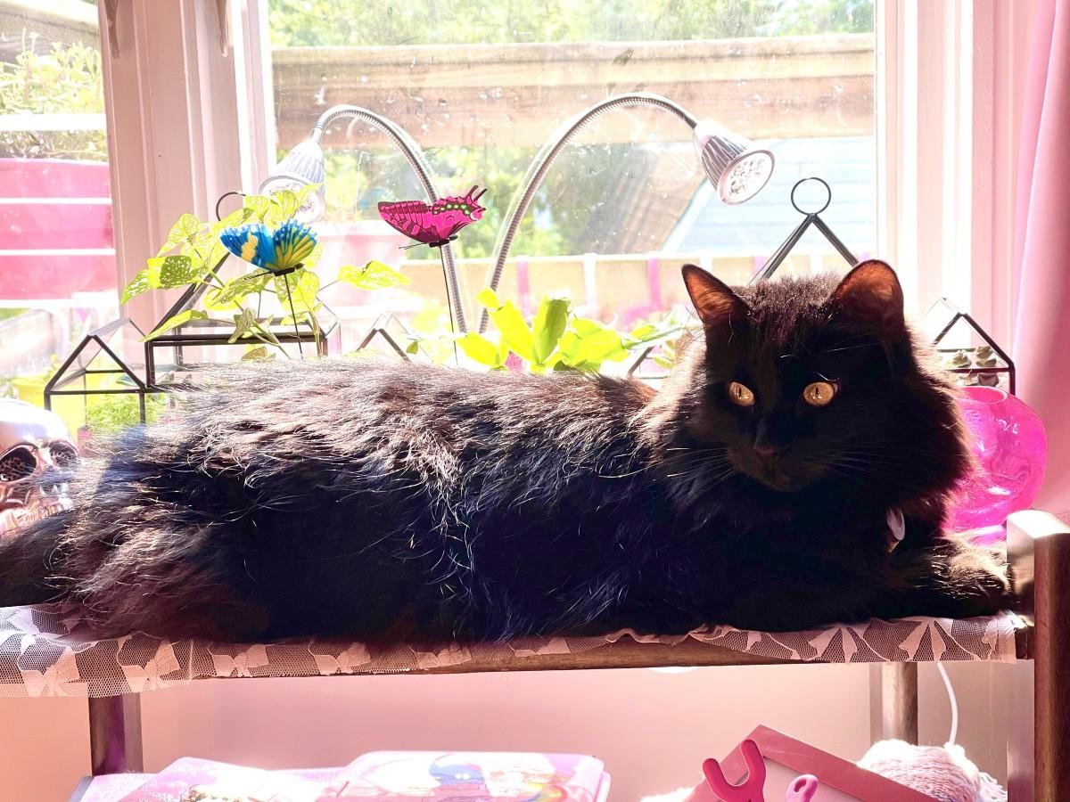 Freyja laying near some of my plants.