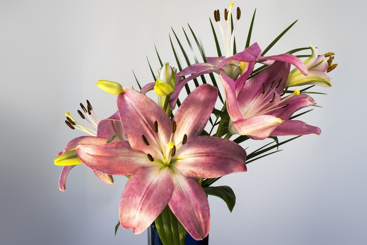 Lilies are very dangerous to cats. Avoid them at all costs.
