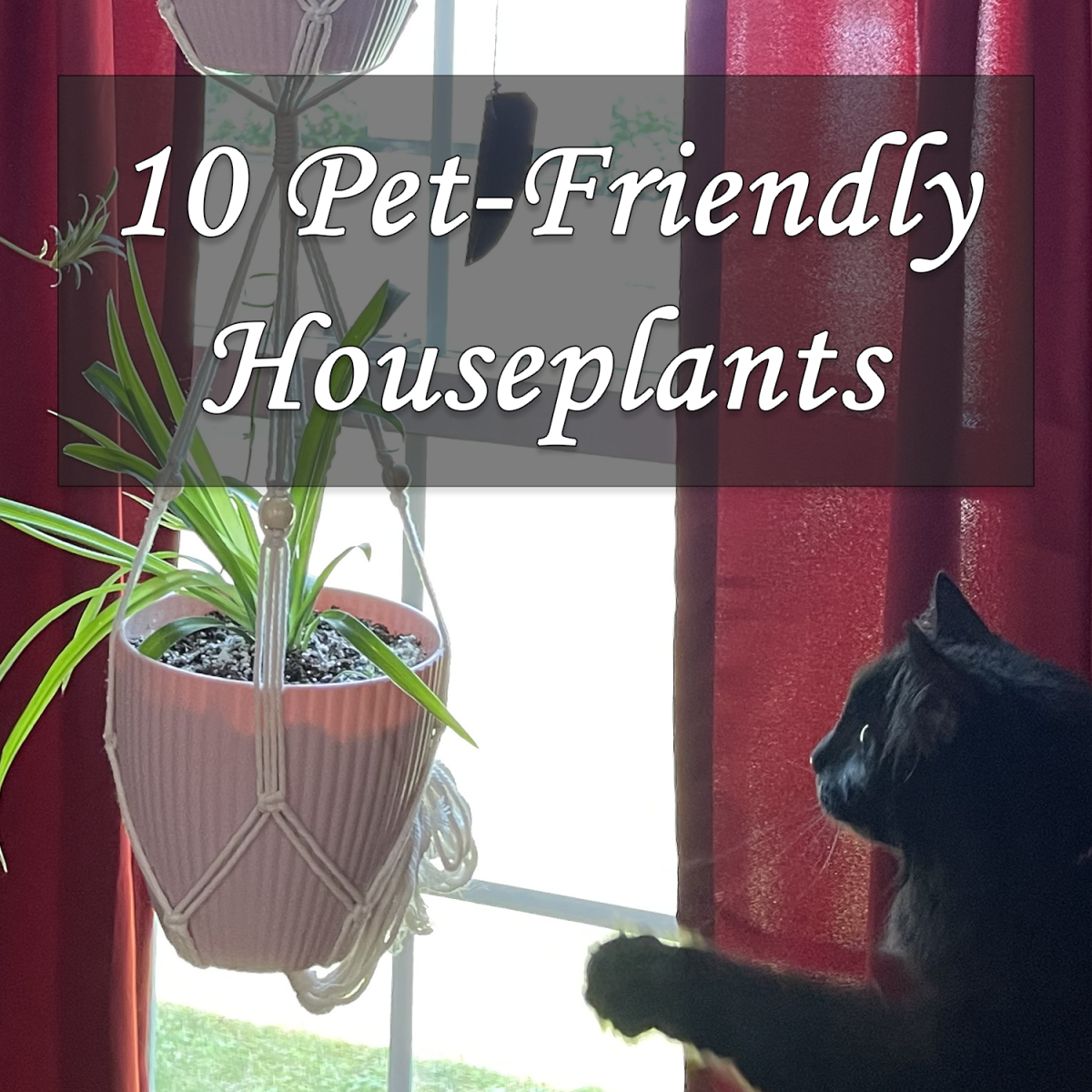 10 Pet-Friendly Houseplants that are Safe for Cats and Dogs