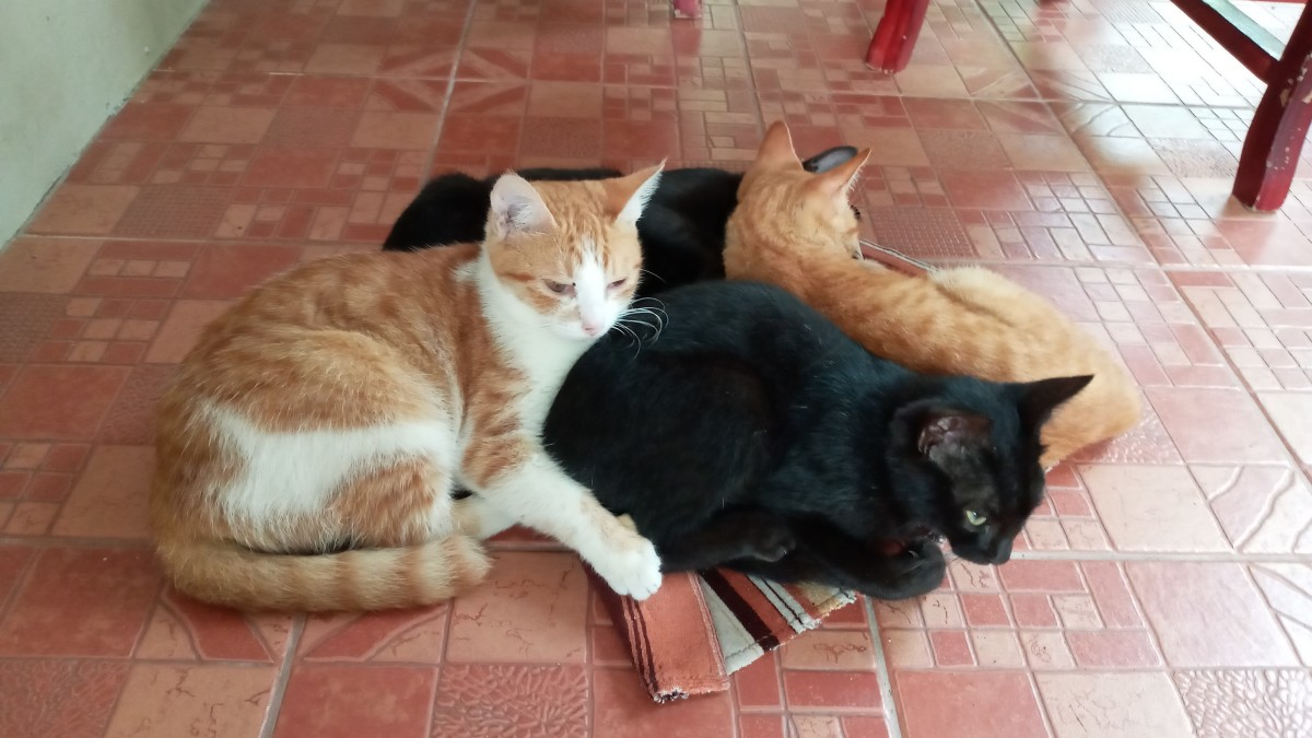 When All Around You Are Cats and Catties