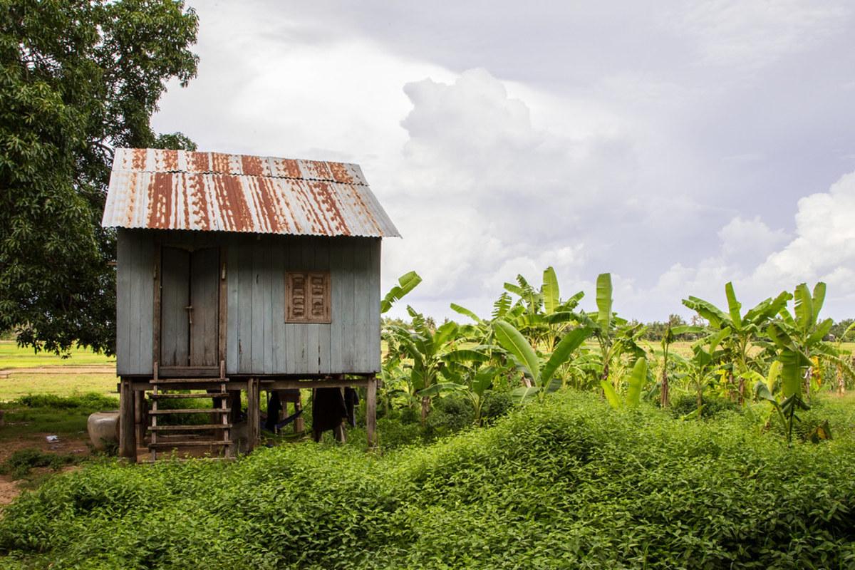 A Banana plantation in Cambodia