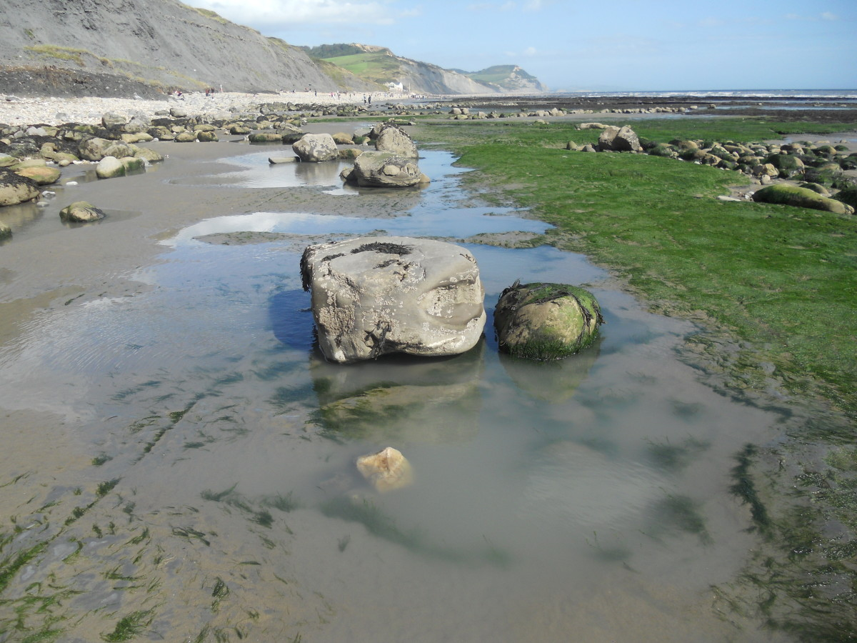 Best places to find fossils on the Jurassic Coast of Dorset in England
