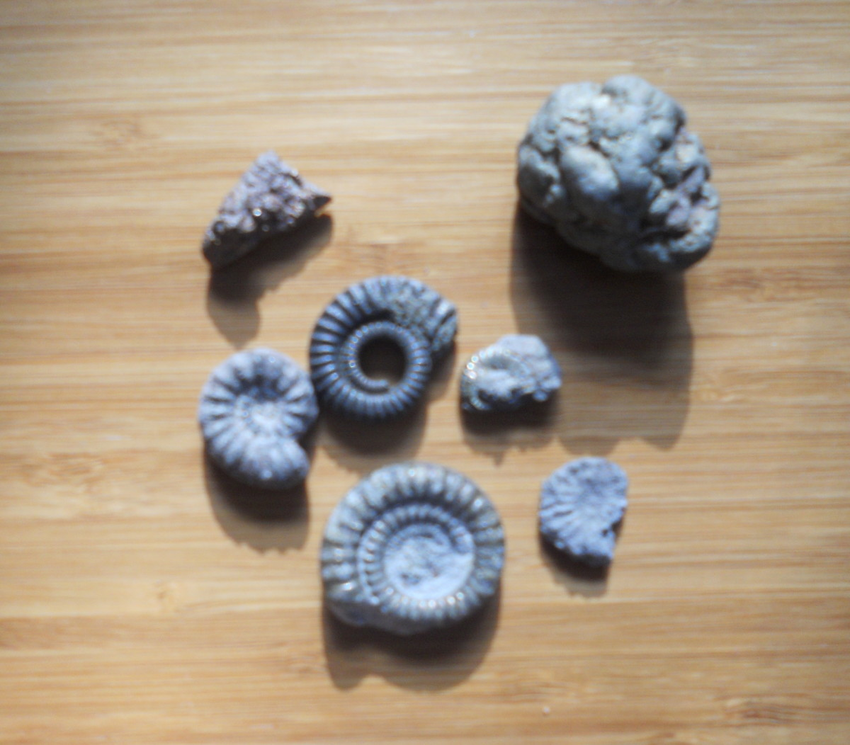 Iron pyrite ammonites and pieces of iron pyrite (top) from the beach at Charmouth