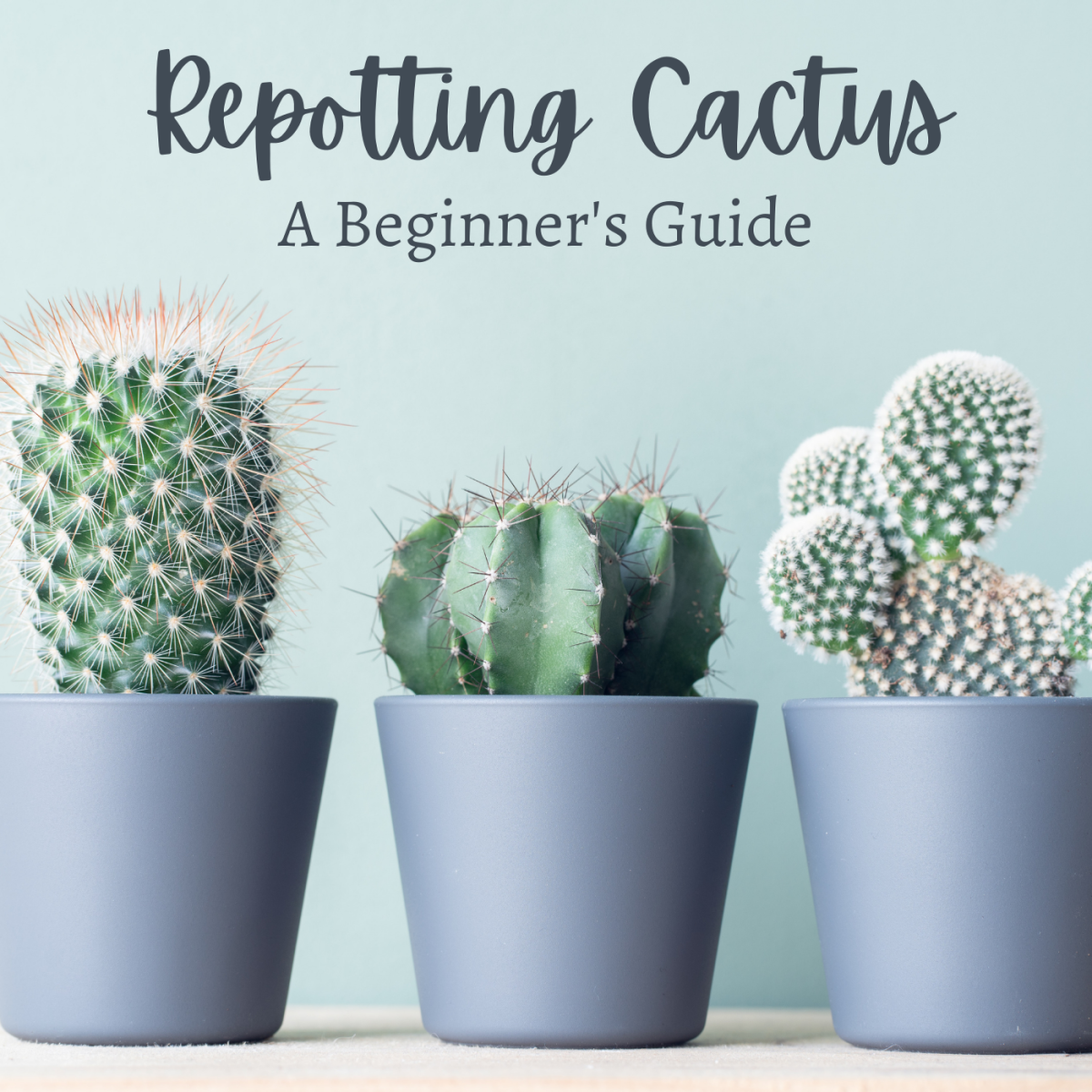 A beginner's guide to handling cactus without getting hurt.