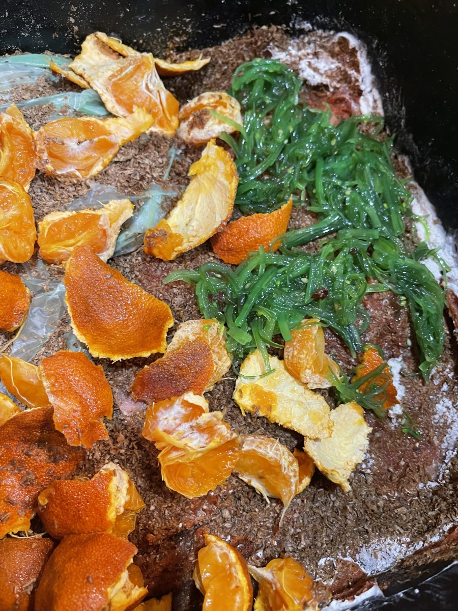 A layer of food scraps before applying a layer of bokashi bran. In this case, the food scraps are rotting oranges and old seaweed salad.