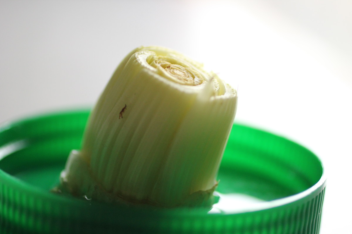 Celery stalk in water