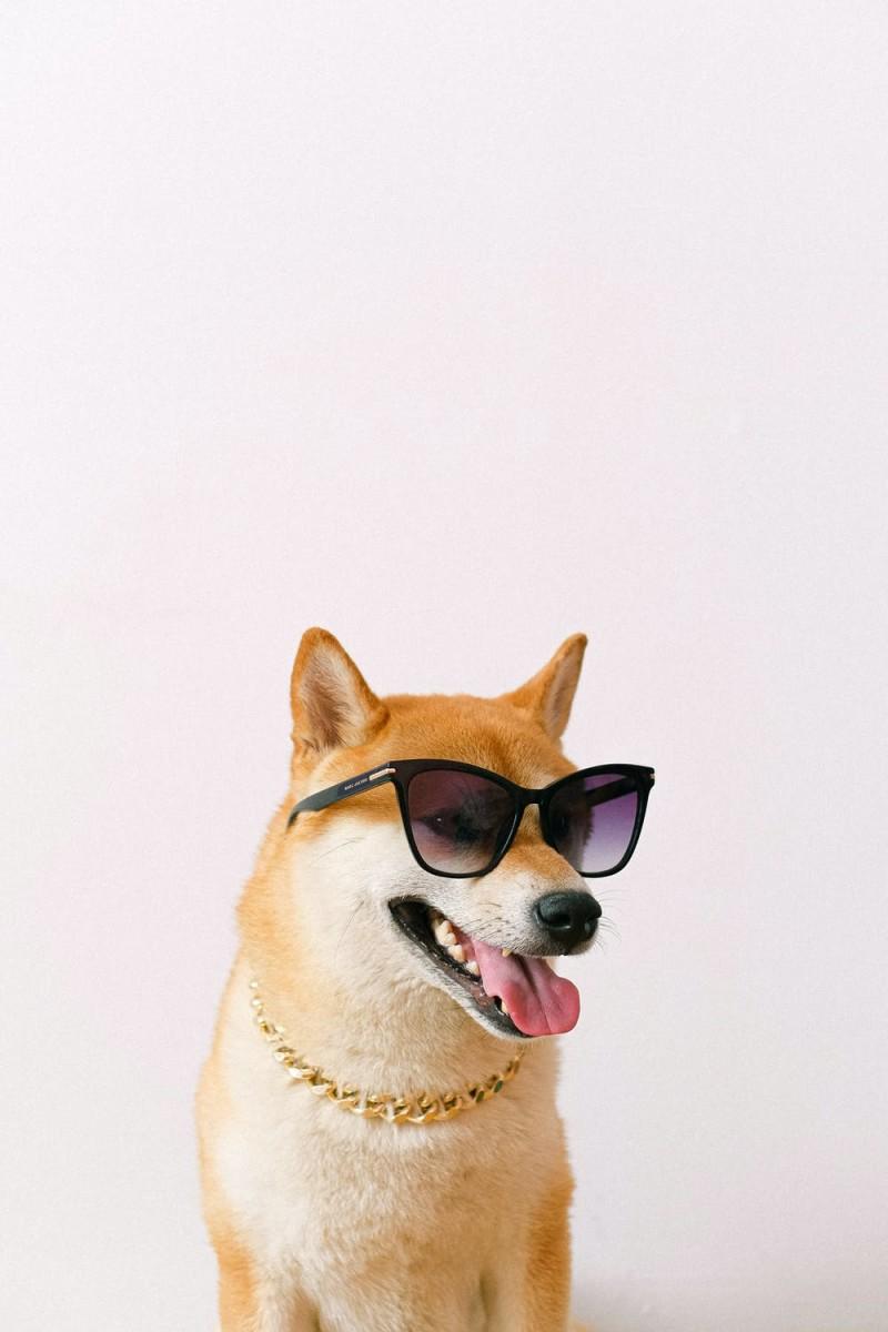 6 Dog Grooming Advertising Ideas
