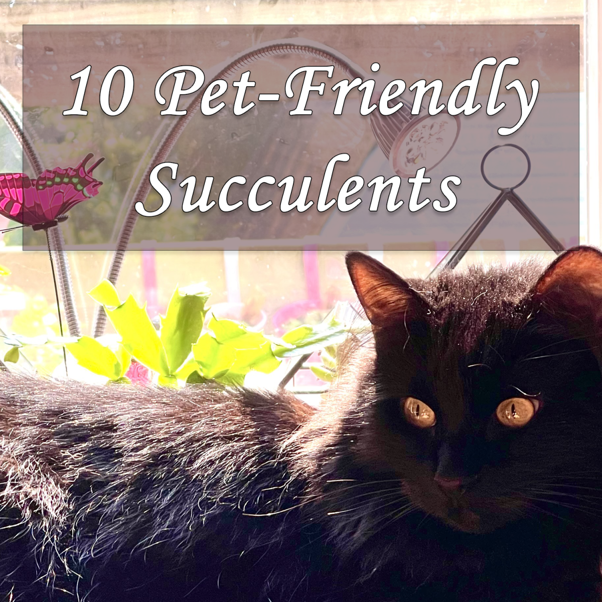 10 Pet-Friendly Succulents that are Safe for Cats and Dogs