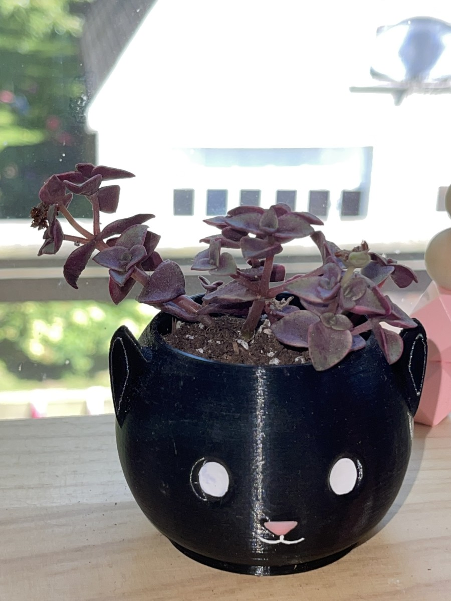 """Nearly all Crassula are toxic to pets, so it is a good idea to keep Crassula pellucida away from pets, despite it's common name """"calico kittens."""""""
