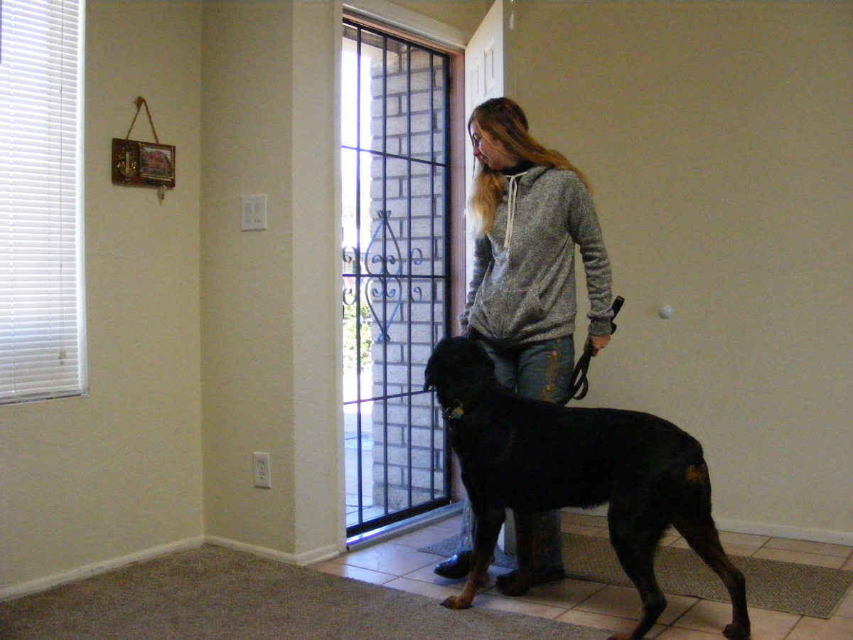 my-indoor-method-for-helping-dogs-reactive-to-other-dogs