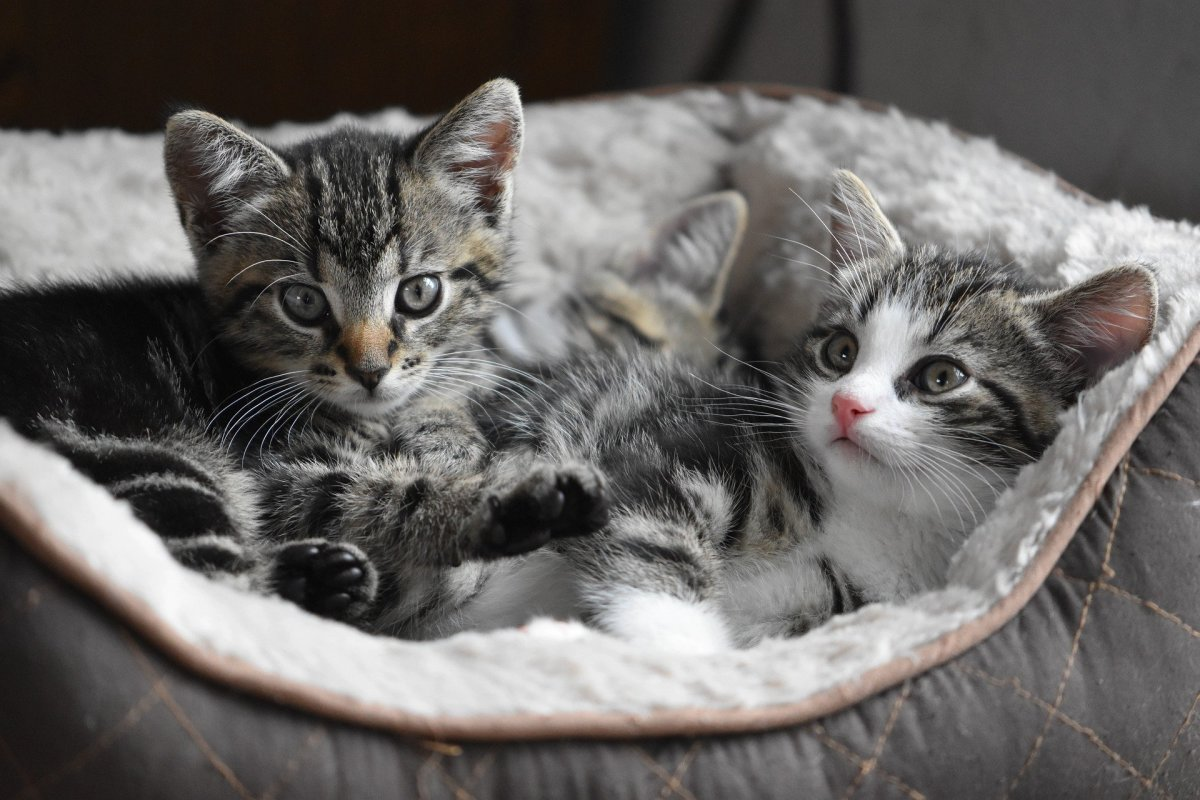 What are these babies thinking? Find out by attending the Cat Behavior Summit.