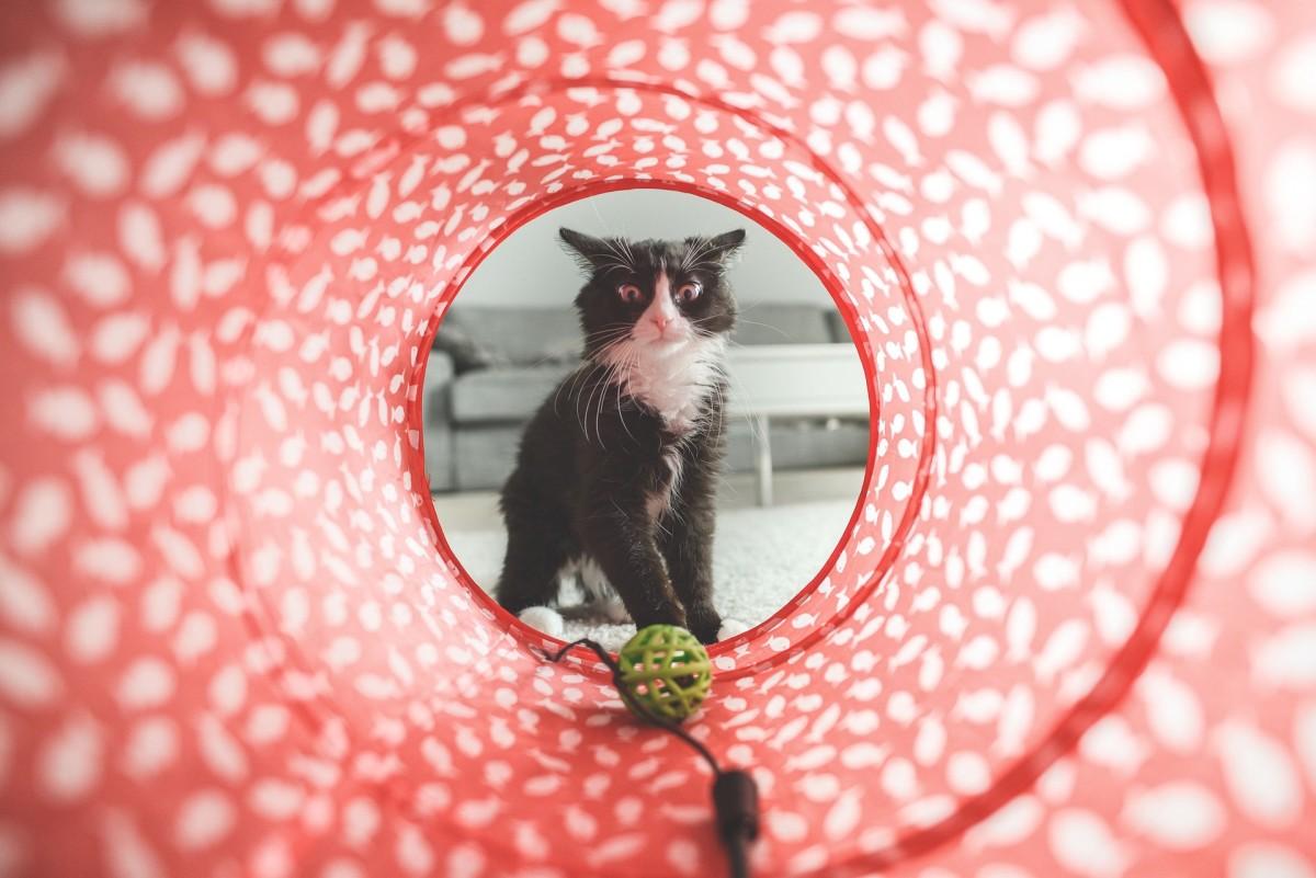 Feline behavior can be baffling at times.