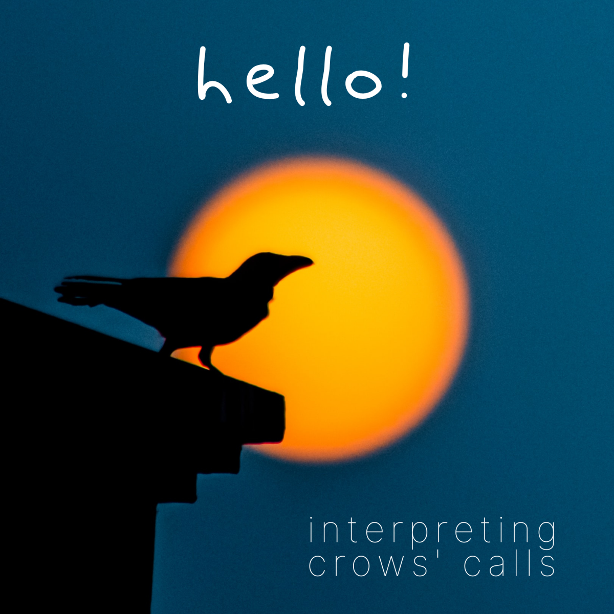 How to interpret crows' calls and caws.
