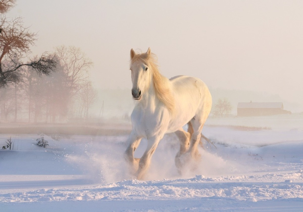 A white horse may be your ride into the afterlife.