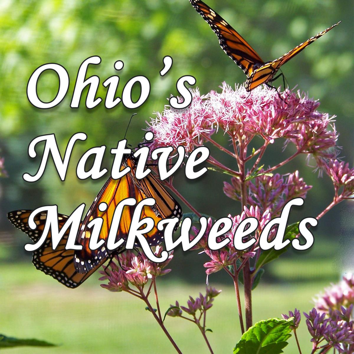 Ohio's Native Milkweeds