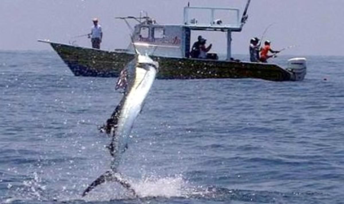 A good catch at Royal Pahang Billfish International Challenge