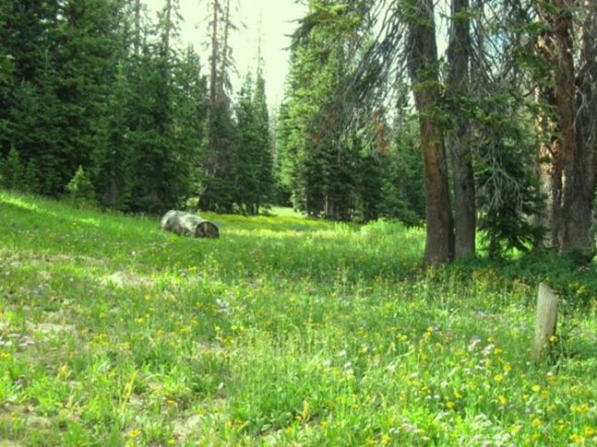 A meadow along the trail to Silver Lake