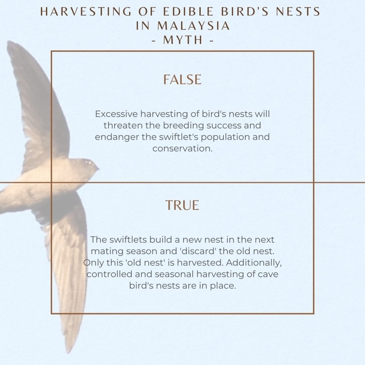The swiftlets build a new nest in the next mating season and 'discard' the old nest. Only this 'old nest' is harvested. Additionally, controlled and seasonal harvesting of cave bird's nests are in place.