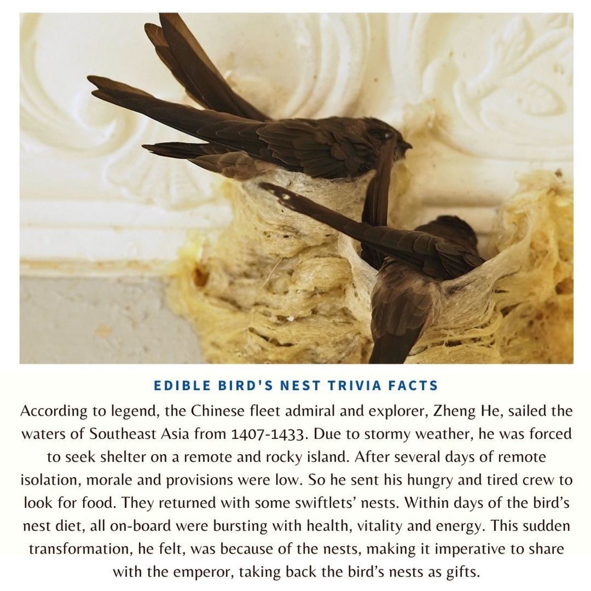 Edible bird's nest trivia facts