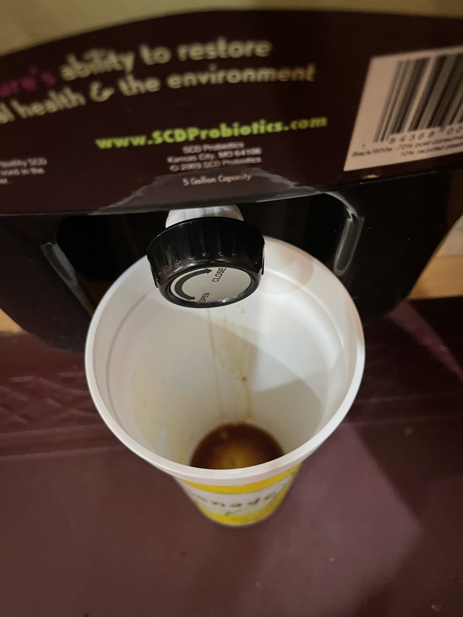 Collecting the bokashi tea from the bokashi bin into a cup.