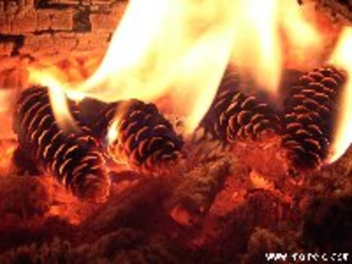 Pine Cones In The Fire