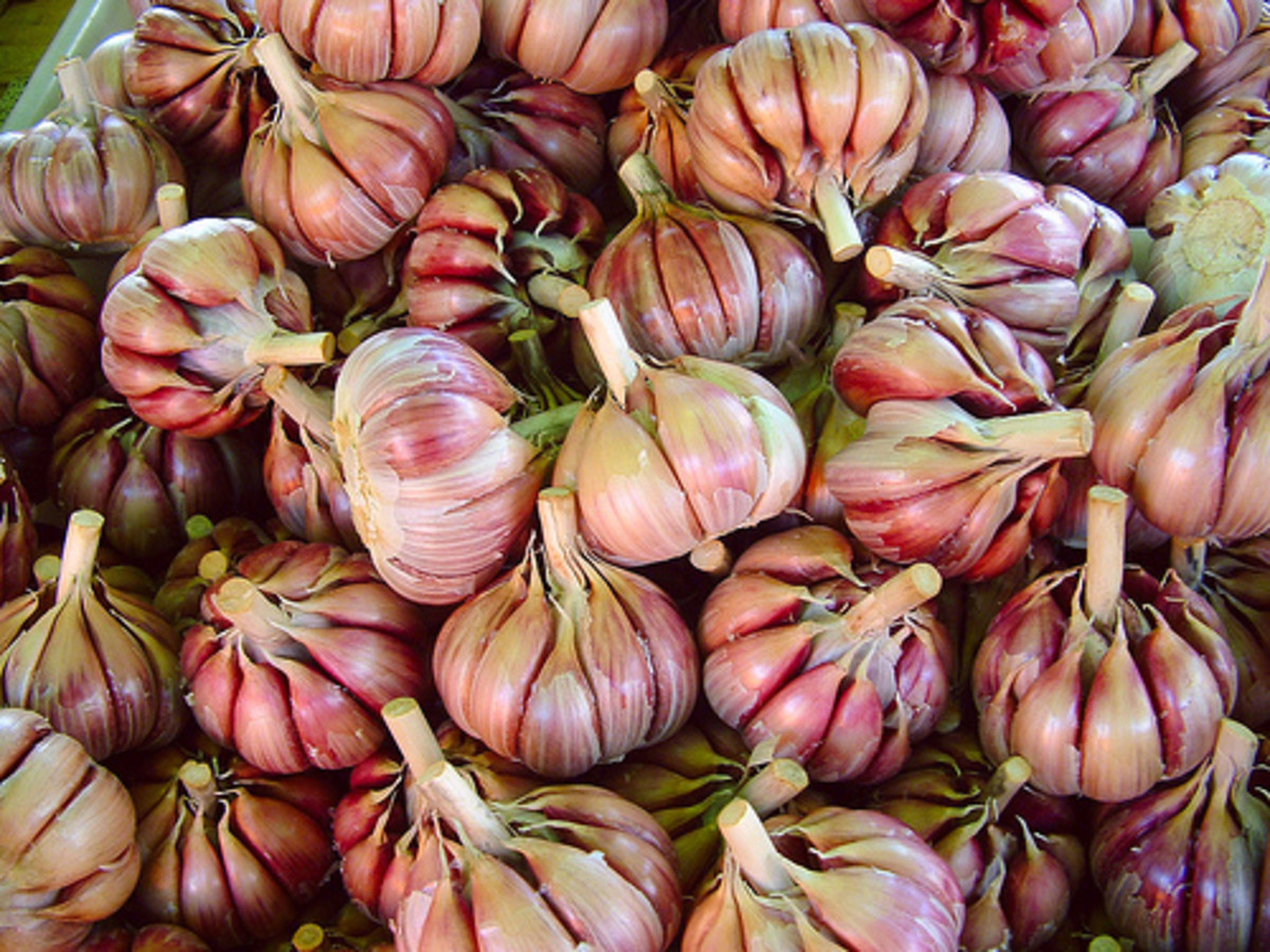 Garlic bulbs (Creative Commons - CC.BY.3.0 via Flickr).