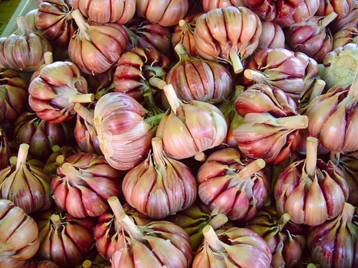 Garlic bulbs (Creative Commons - CC.BY.3.0 via Flickr).
