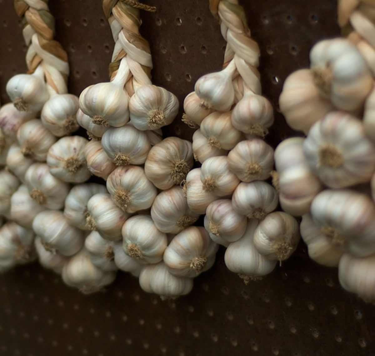 Braided garlic (Creative Commons - CC BY 3.0 - via Flickr).